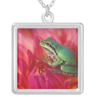 Pacific tree frog on flowers in our garden, 4 silver plated necklace