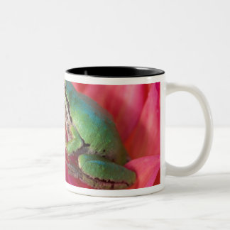 Pacific tree frog on flowers in our garden, 4 Two-Tone coffee mug