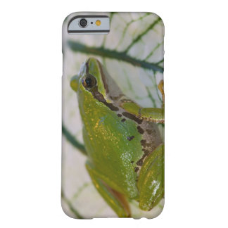 Pacific tree frog on flowers in our garden, barely there iPhone 6 case
