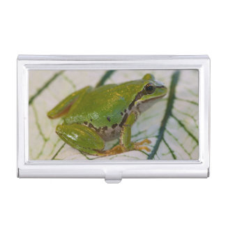 Pacific tree frog on flowers in our garden, business card holder