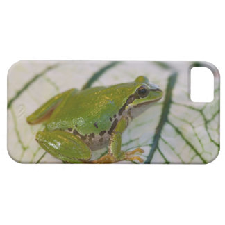 Pacific tree frog on flowers in our garden, iPhone 5 cover