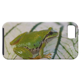 Pacific tree frog on flowers in our garden, iPhone 5 covers
