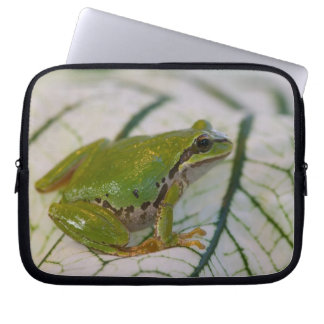 Pacific tree frog on flowers in our garden, laptop sleeve