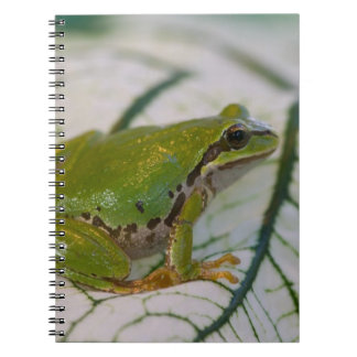 Pacific tree frog on flowers in our garden, notebook