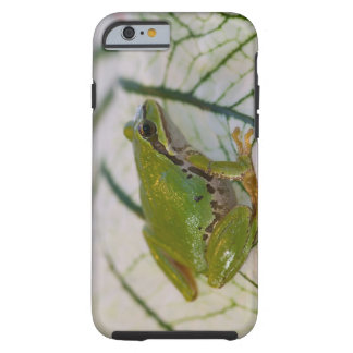 Pacific tree frog on flowers in our garden, tough iPhone 6 case