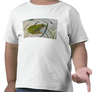Pacific tree frog on flowers in our garden, t shirt
