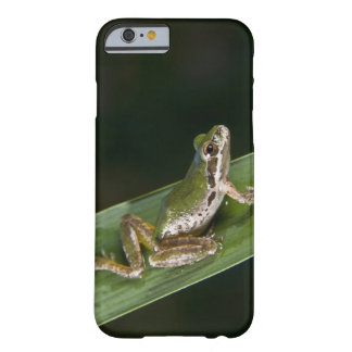 Pacific Tree Frog (Pseudacris regilla) Barely There iPhone 6 Case