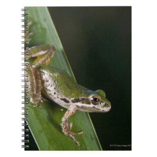 Pacific Tree Frog (Pseudacris regilla) Notebook