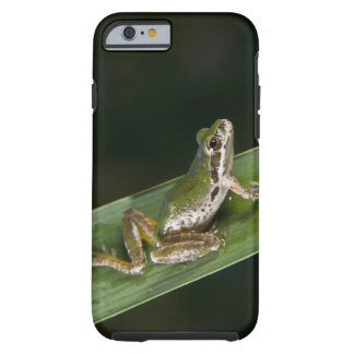 Pacific Tree Frog (Pseudacris regilla) Tough iPhone 6 Case