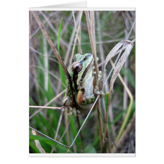 Pacific Treefrog or Chorus Frog Card
