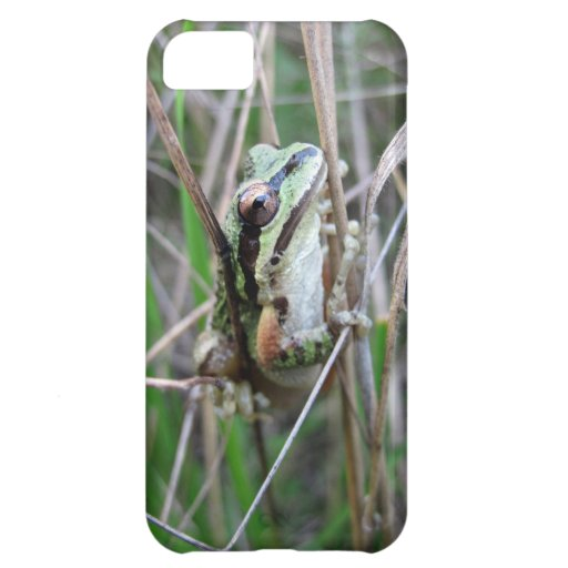 Pacific Treefrog or Chorus Frog iPhone 5C Cases