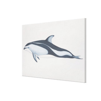 Pacific White-Sided Dolphin Stretched Canvas Prints