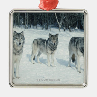 Pack of wolves at edge of snowy forest christmas ornament