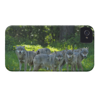 Pack of Wolves, Germany Case-Mate iPhone 4 Case