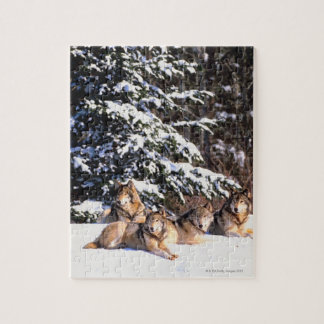 Pack of wolves in winter jigsaw puzzle