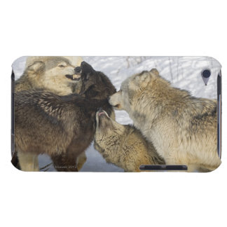 Pack of wolves interacting Case-Mate iPod touch case