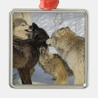 Pack of wolves interacting Silver-Colored square decoration