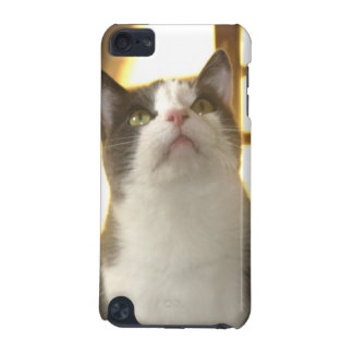 Paco Kitty Looks up iPod Case iPod Touch (5th Generation) Cover