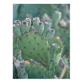Paddle Cactus Postcard