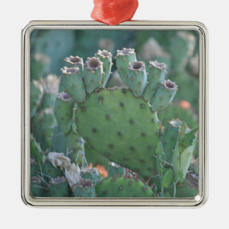 Paddle Cactus Silver-Colored Square Decoration