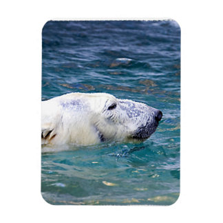 Paddling Polar Bear Magnets