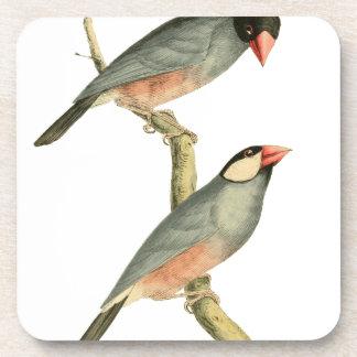 Paddy bird, Rice bird, or Java Sparrow Bird Illust Coaster