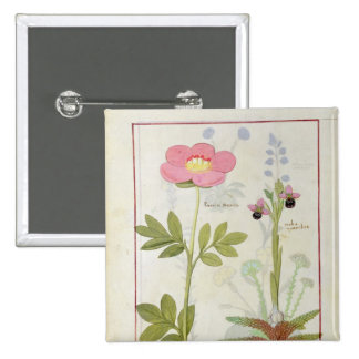 Paeonia or Peony, and Orchis myanthos 15 Cm Square Badge