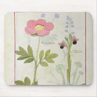 Paeonia or Peony, and Orchis myanthos Mouse Mat