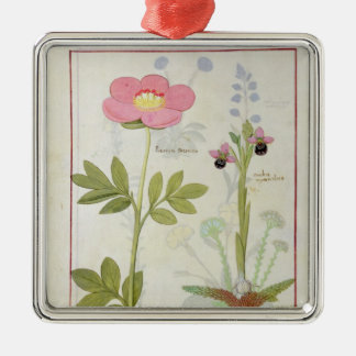 Paeonia or Peony, and Orchis myanthos Silver-Colored Square Decoration