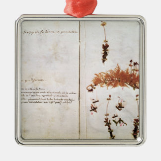 Page 15 from a Herbarium Christmas Ornament