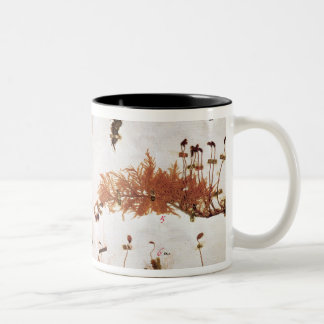 Page 15 from a Herbarium Two-Tone Coffee Mug