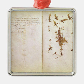 Page 24 from a Herbarium Christmas Ornament