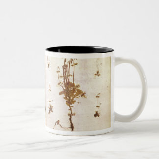 Page 24 from a Herbarium Two-Tone Coffee Mug