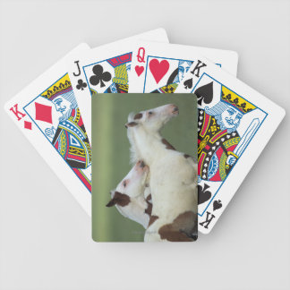 Paint Foals Playing Poker Deck