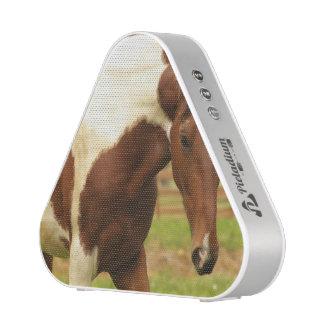 paint-horse-30