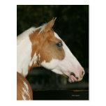 Paint Horse Headshot 2 Postcards