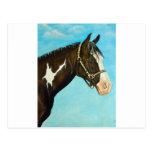 Paint Horse Post Card