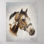 Paint Horse Poster