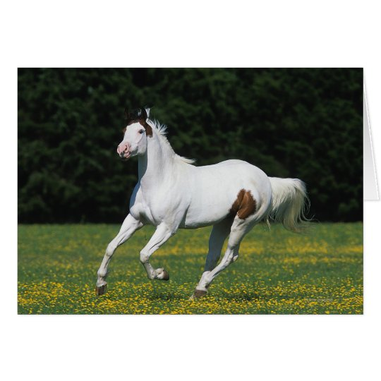 Paint Horse Running in Grassy Field Card