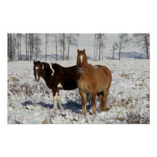 Paint Horses in the Snow Poster