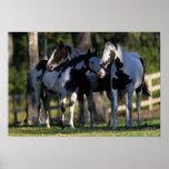 Paint Horses Print