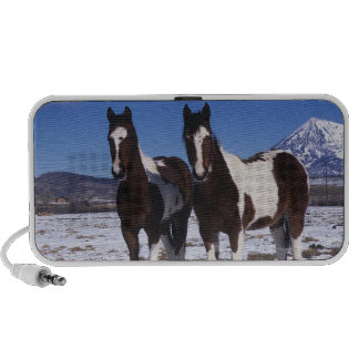 Paint Horses Standing in the Snow Mini Speakers