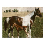 Paint Mare and Foal Postcard