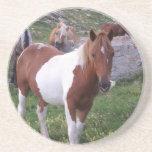 Paint Pony Coasters