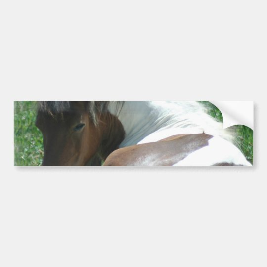 Paint Pony Resting Bumper Sticker. Bumper Sticker