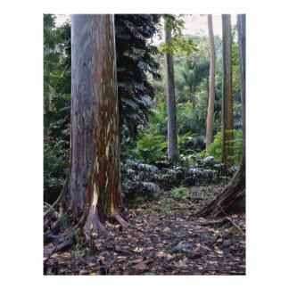 Painted bark eucalyptus, Maui, Hawaii 21.5 Cm X 28 Cm Flyer