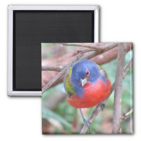 Painted Bunting Magnet
