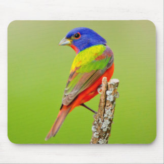 Painted Bunting (Passerina ciris) Male Perched Mouse Mat