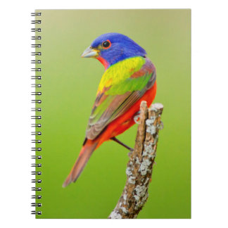 Painted Bunting (Passerina ciris) Male Perched Notebooks