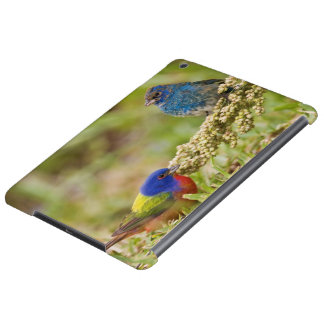 Painted Bunting Passerina citria) adult male 2